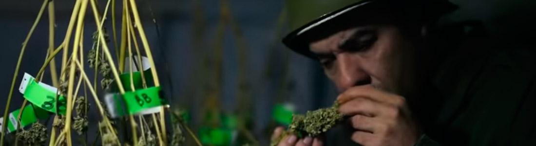 Una nueva ficción en Montevideo: Marihuana en clave de humor